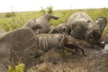 Trafic d'ivoire: les éléphants du Mozambique massacrés par centaines