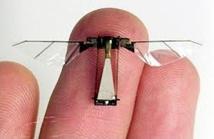 L'avenir des drones dans la biologie des insectes? Pas si bête