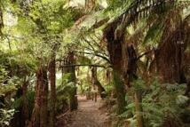 Patrimoine mondial: l'Unesco refuse de déclasser des forêts australiennes