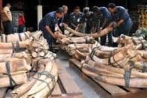 """Les crimes contre l'environnement financent groupes armés et """"terroristes"""""""