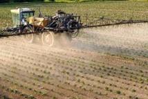 Les pesticides menacent les oiseaux et les vers de terre autant que les abeilles