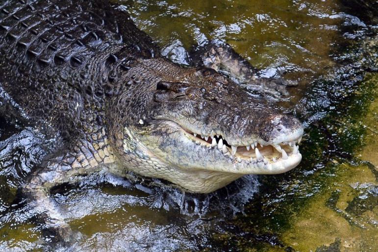 Grèce: apparition mystérieuse d'un crocodile sur l'île de Crète
