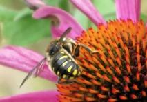 Des chercheurs reconstituent le paysage ancien de Marseille grâce aux insectes et aux pollens