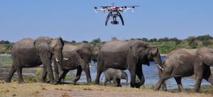 La technologie pour protéger éléphants et rhinocéros du braconnage en Afrique