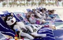Sur le littoral romain, une plage réservée aux chiens