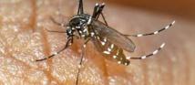 Le Var en état de vigilance après un premier cas de dengue autochtone