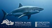 Méditerranée: les dents de la mer sont bien émoussées