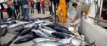 Des nations d'Asie-Pacifique veulent diviser par deux la pêche de jeunes thons rouges