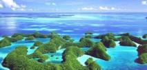 Dans l'archipel des Palaos, les touristes se bousculent pour nager avec les squales
