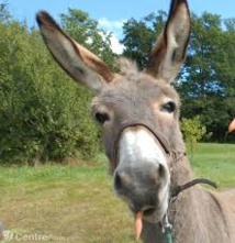Une association de protection des ânes poursuit une ex-employée pour diffamation