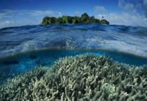 Les Etats-Unis créent le plus vaste sanctuaire marin dans le Pacifique
