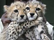 Moitié moins d'animaux sauvages sur Terre qu'il y a 40 ans
