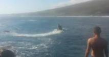 Australie: un surfeur de 23 ans grièvement blessé par un requin