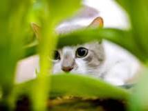 """Allemagne: polémique autour d'un projet d'interdiction de la """"chasse au chat"""""""