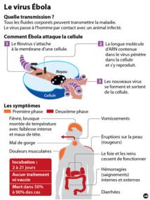 Ebola: cinq questions-clés sur un virus tueur