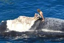 """Un Australien s'excuse d'avoir """"surfé"""" sur le cadavre d'une baleine"""