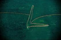Google s'engage dans la lutte contre la pêche illégale