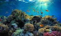 Grande barrière de corail: Canberra répond à Barak Obama