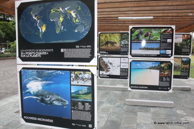 Les 34 merveilles du monde naturel en photos aux Jardins de Paofai