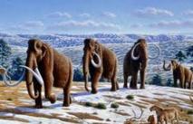Les mastodontes ont disparu de l'Arctique avant l'arrivée des premiers humains