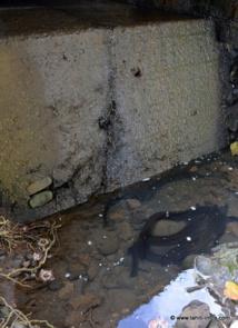 Difficile de remonter la rivière dans ces conditions, même pour des anguilles de 2 mètres de long