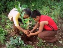 L'Amérique Latine s'engage à reboiser près de 20 millions d'hectares