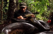 Avalé vivant, volontairement, par un anaconda