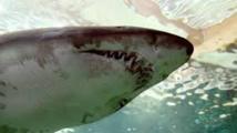Un adolescent tué par un requin en Australie