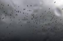 Les oiseaux ont un sixième sens qui leur permet de fuir avant les tempêtes