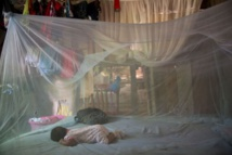 Recul de l'épidémie de chikungunya en Polynésie