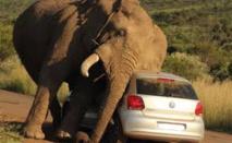 Des éléphants sèment le trouble dans un parc national thaïlandais