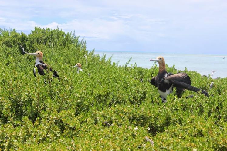 Biodiversité : Les trésors cachés de Scilly et Mopelia