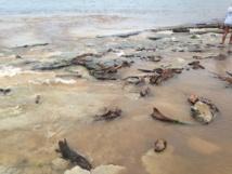 Eau boueuse et déchets déposés sur le platier de la plage du PK 18 durant le week-end dernier.