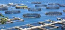 """L'aquaculture, une """"schizophrénie française"""""""