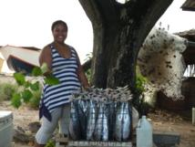 Une étude révèle les bienfaits du thon pour la santé des populations océaniennes