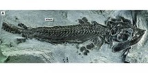 En Russie, identification d'un reptile marin vieux de 70 millions d'années