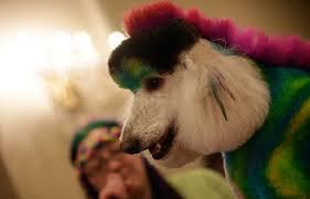 Fashion Week: les animaux de compagnie ont aussi leurs défilés