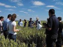 Pour réduire les pesticides, les céréaliers testent le biocontrôle