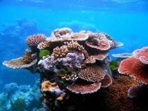 En Nouvelle-Calédonie, la bonne santé des récifs coralliens