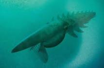 Découverte d'un monstre marin vivant il y a 480 millions d'années