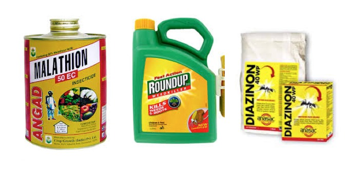 """Cinq pesticides classés cancérogènes """"probables"""" ou """"possibles"""" par l'agence du cancer de l'OMS"""