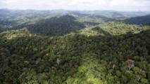 © AFP/Archives, Jody Amiet La forêt guyanaise, près de Dorlin