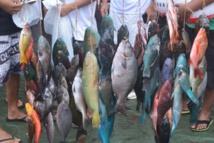 Pêche sous marine : Les champions de Polynésie par équipes 2014 connus
