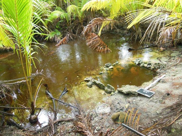 Une source d'eau douce aménagée sur Rimatu'u.