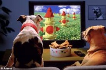 DogTV, chaîne pour toutous désoeuvrés, arrive en France