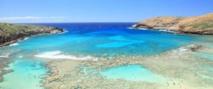 L'acidification des océans, responsable de la plus grande extinction d'espèces