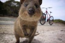 Australie: deux touristes français condamnés pour avoir mis le feu à un marsupial