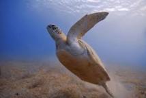 Une espèce animale sur six menacée par le réchauffement climatique