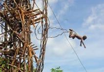 Saut du Gol à Vanuatu : la tension monte entre tribus rivales