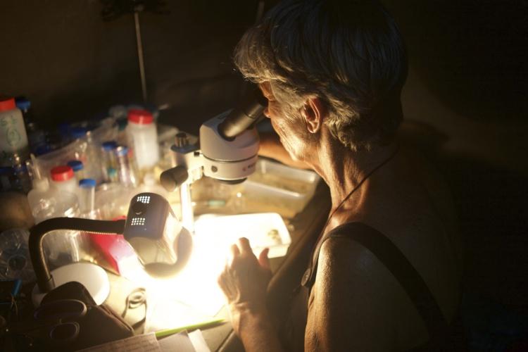 Les biologistes marins examinent les spécimens récoltés.